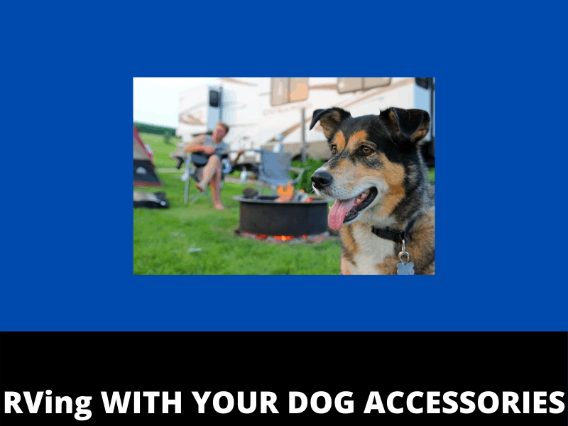 rving with your dog